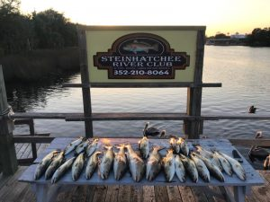Steinhatchee Rive Club Caught Fish